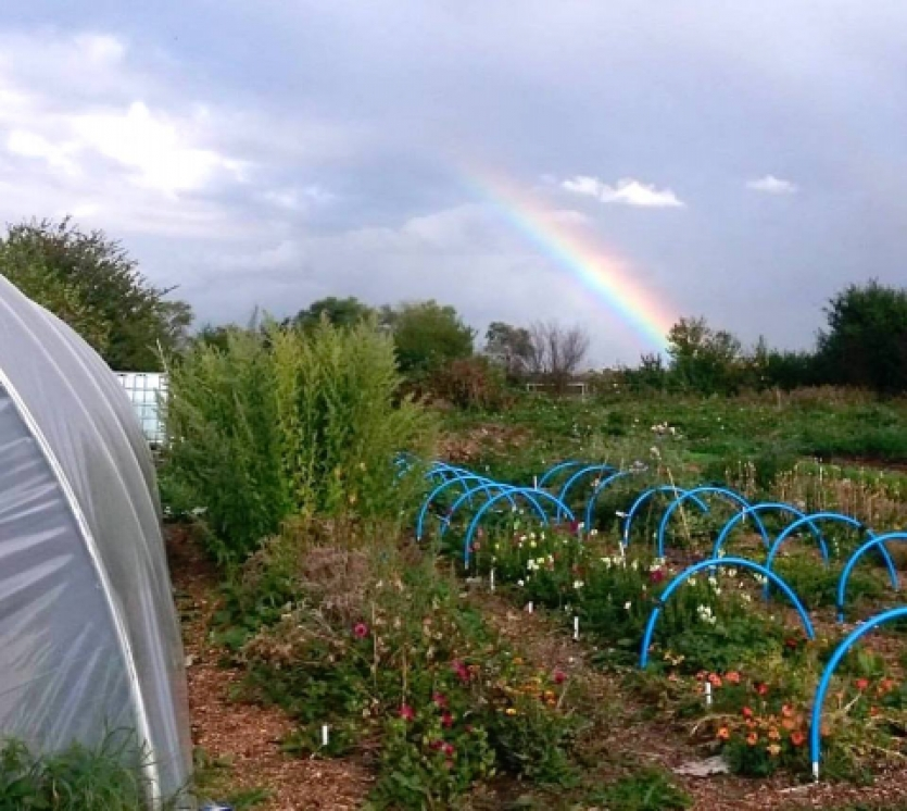 Audacious Veg organic urban agriculture