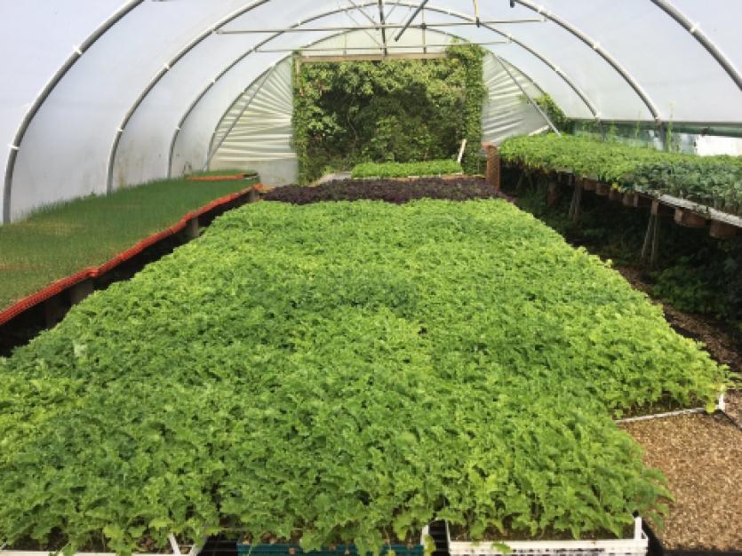 seedlings at Ripple Farm