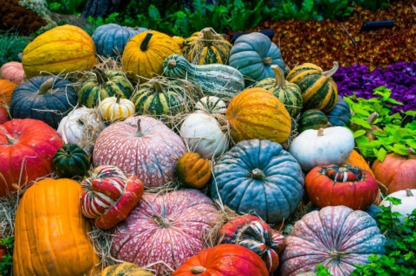 Seasonal Recipes To Enjoy This Autumn