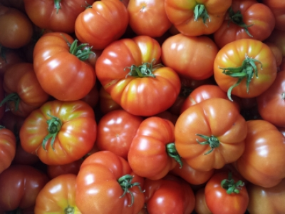 Hughes organic tomatoes