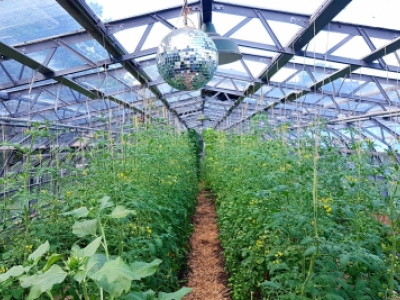 Notes from the Wolves Lane glasshouse