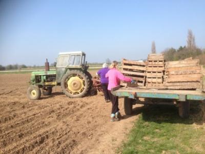 Sarah Green's Organics potato planting